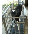 Kälberwaage 1-2-3 Tierwaage mit Kalb